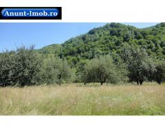 Anunturi Imobiliare Teren Casa/Cabana Lotrioara Sibiu