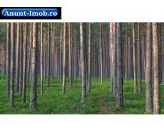 Anunturi Imobiliare Vand padure stejar