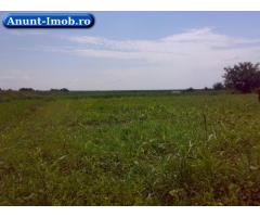 Anunturi Imobiliare Vand teren extravilan maia- judet ialomita 3ha