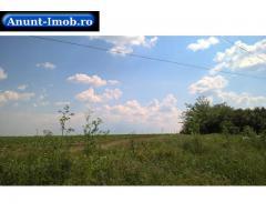 Anunturi Imobiliare Vanzare teren agricol Singureni, Jud. Giurgiu