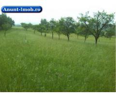 Anunturi Imobiliare Teren imprejurimi Deva, Hunedoara, Brad, Soimus 11520 mp