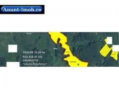 Anunturi Imobiliare Vand padure netaiata 10.24Ha fag, 4250 Euro/Ha, Dambovita