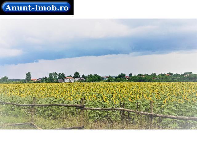 Anunturi Imobiliare Teren 5150 mp pentru constructii case langa padure Balotesti