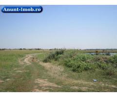 Anunturi Imobiliare Teren agricol 43300 mp, Bolintin-Deal, Giurgiu