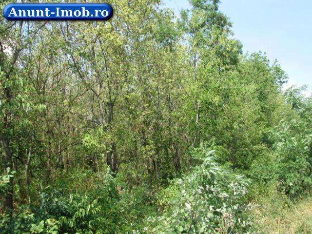 Anunturi Imobiliare Teren 100,000 mp, Livada, Satu Mare