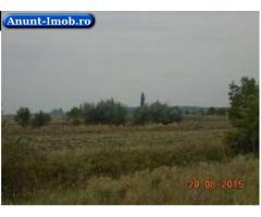 Anunturi Imobiliare Teren arabil 14.880 mp, Otopeni, Ilfov