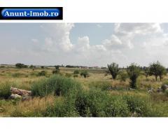 Anunturi Imobiliare Teren intravilan 30900 mp, sat Livada, Arad
