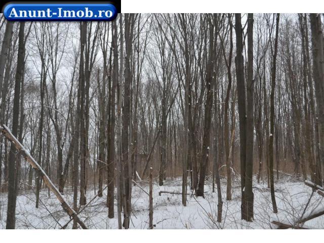 Anunturi Imobiliare Padure  - Ialomita- Slobozia – suprafata 257 ha