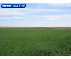 Anunturi Imobiliare Teren agricol-Teleorman- Zimnicea-17 ha