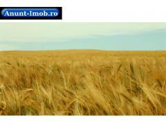 Anunturi Imobiliare Teren agricol – arenda -2200 ha –Caras  Severin