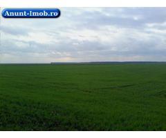 Anunturi Imobiliare Teren agricol – Teleorman – Mosteni – 60 ha