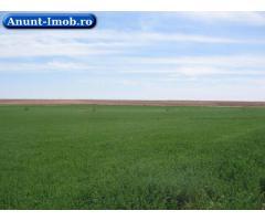 Anunturi Imobiliare Teren agricol de vanzare-Teleorman- Zimnicea-17 ha