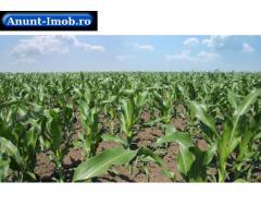 Anunturi Imobiliare Vanzare teren agricol  Botosani  - 560 ha